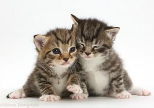 tiny Котята