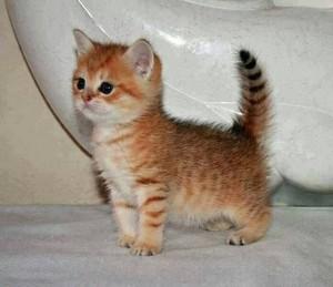 tiny gatitos