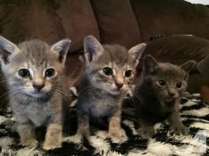 tiny kittens