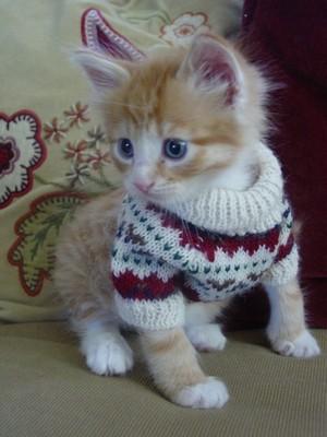 tiny 小猫