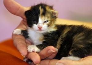 tiny newborn chatons
