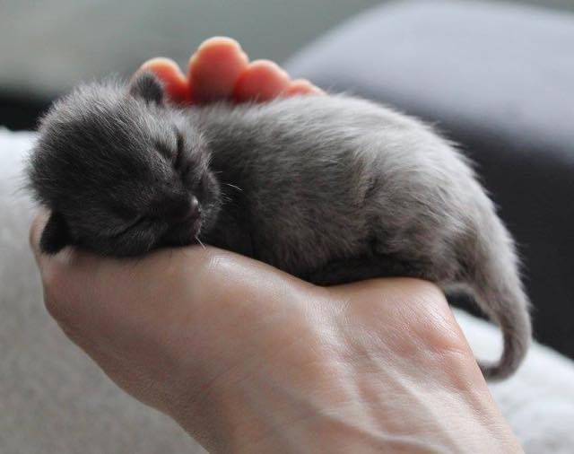 Kittens Images Tiny Newborn Wallpaper And Background Photos