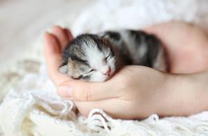 tiny newborn mga kuting
