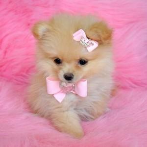 tiny 子犬