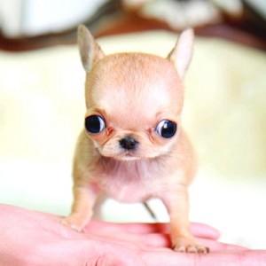 tiny पिल्लें