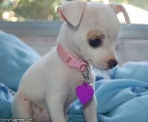 tiny puppies