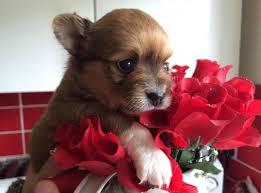 tiny Cuccioli