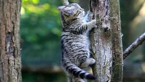 baum climbing