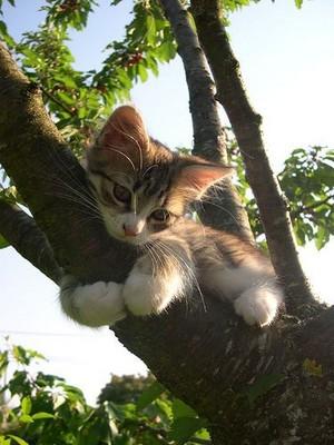 나무, 트리 climbing