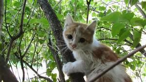 arbre climbing