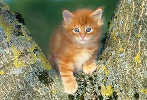 cây climbing