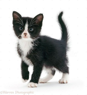 very cute black and white chatons