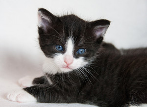 very cute black and white kittens