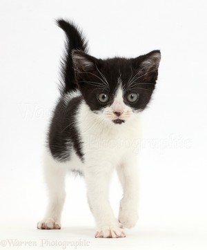 very cute black and white gatinhos