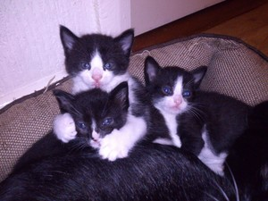 very cute black and white Kätzchen
