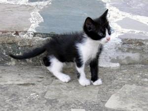 very cute black and white mga kuting