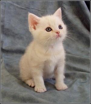 white gatinhos