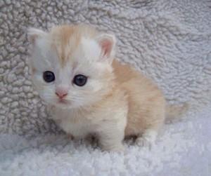 world's cutest mèo con