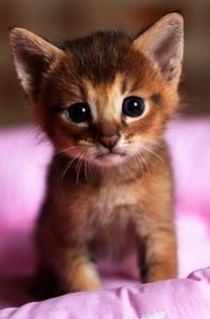 world's cutest Котята