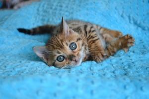 world's cutest kittens