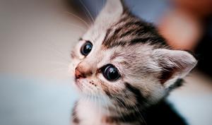 world's cutest mga kuting