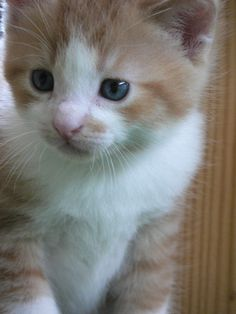 world's cutest chatons