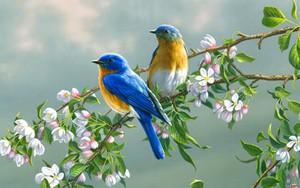 birds amor