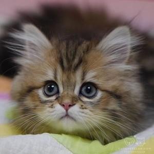 Adorable cat 😺