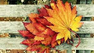 Autumn Leaves in Harmony