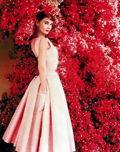 Lavendergolden fond d'écran entitled Beautiful Audrey