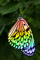 Beautiful Butterfly - butterflies photo