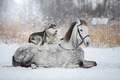 Best Friends - horses photo
