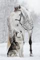 Best Friends - horses photo