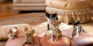 Beverly Hills Chihuahua2