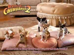 Beverly Hills Chihuahua2