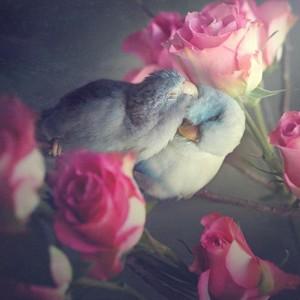 Birds Birds birds💖