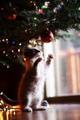Christmas and Cats - christmas photo