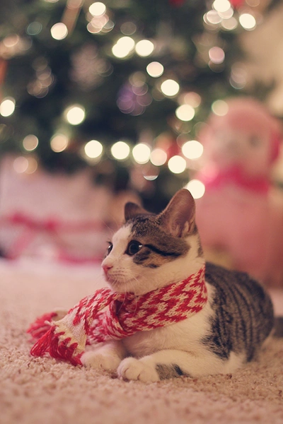 Christmas and Cats
