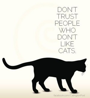 Don't Trust People Who Don't Like gatos