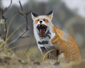 Drowsy foxy