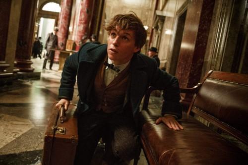 Fantastic Beasts and Where to Find Them fondo de pantalla called Fantastic Beasts And Where To Find Them