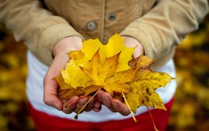 Girl Hands Autumn Leaves