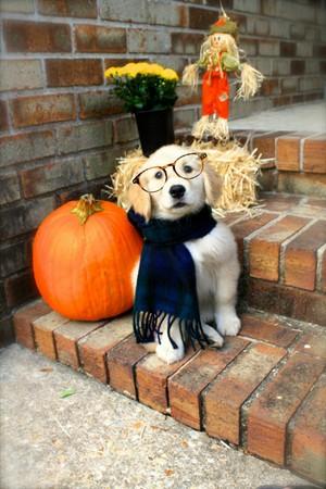Happy Хэллоуин my sweet Leftie🍂🎃