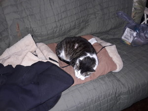 Jennifer Sleeping