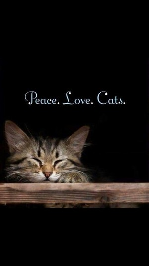 Peace. Love. Cats.😺