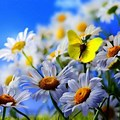 Pretty borboletas 🌸