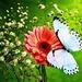 Pretty Butterflies 🌸