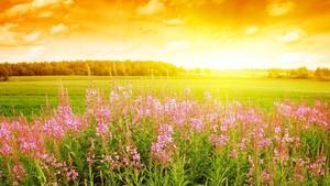Sun of bunga