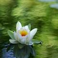The Meditating fleur