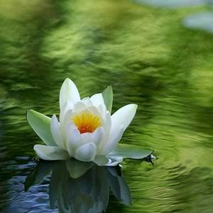 The Meditating Flower